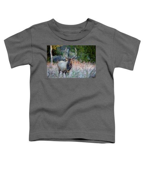 Rocky Mountain Wildlife Bull Elk Sunrise Toddler T-Shirt