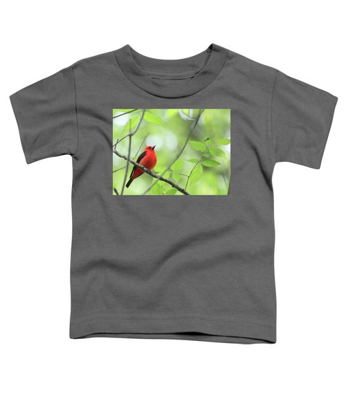 Scarlet Tanager Toddler T-Shirt