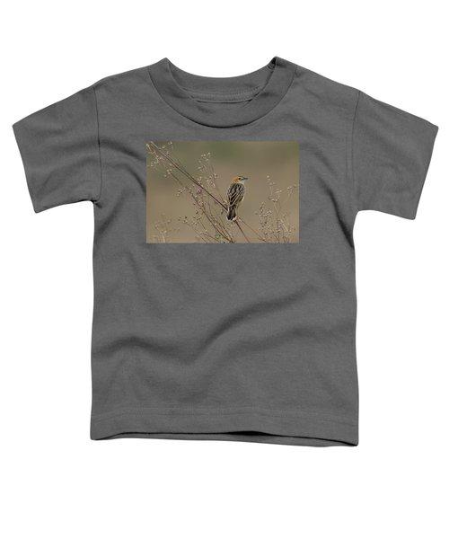 Stout Cisticola Toddler T-Shirt