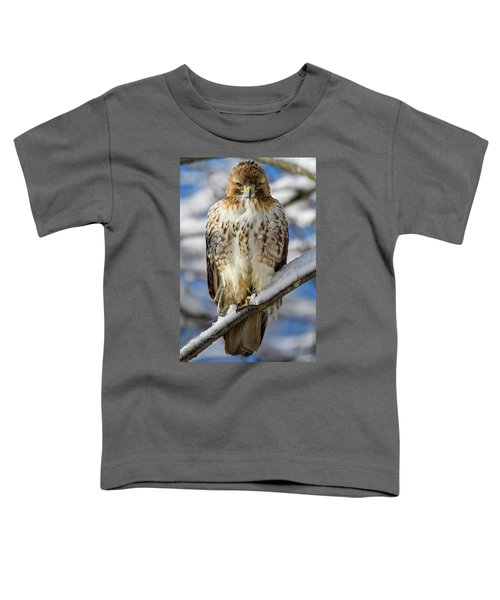 The Look, Red Tailed Hawk 1 Toddler T-Shirt