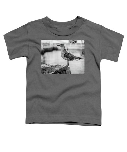 Young Seagull Toddler T-Shirt