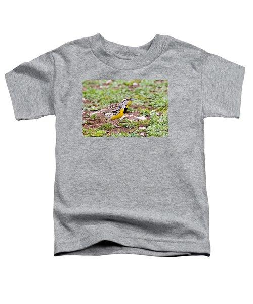 Eastern Meadowlark Sturnella Magna Toddler T-Shirt