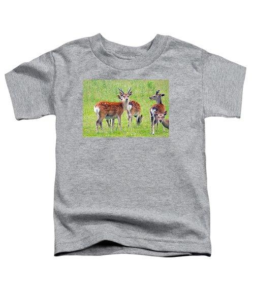Fallow Deer Toddler T-Shirt