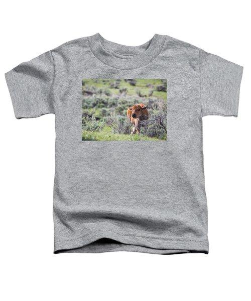 Bison Calf Toddler T-Shirt