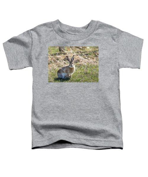 Jackrabbit Toddler T-Shirt