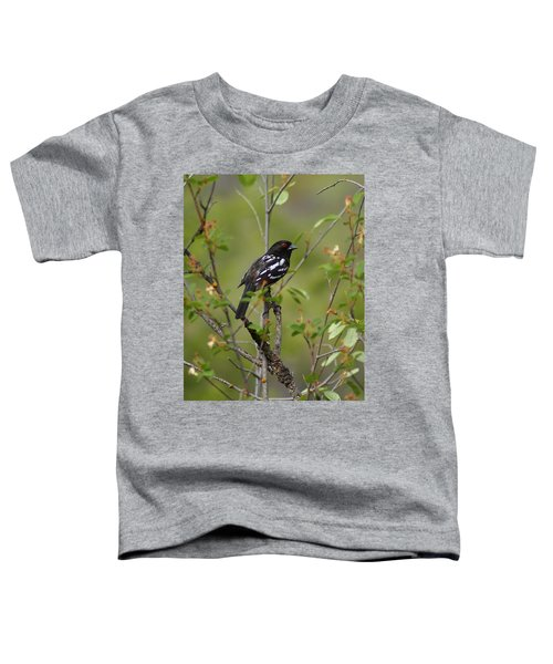 Spotted Towhee Toddler T-Shirt