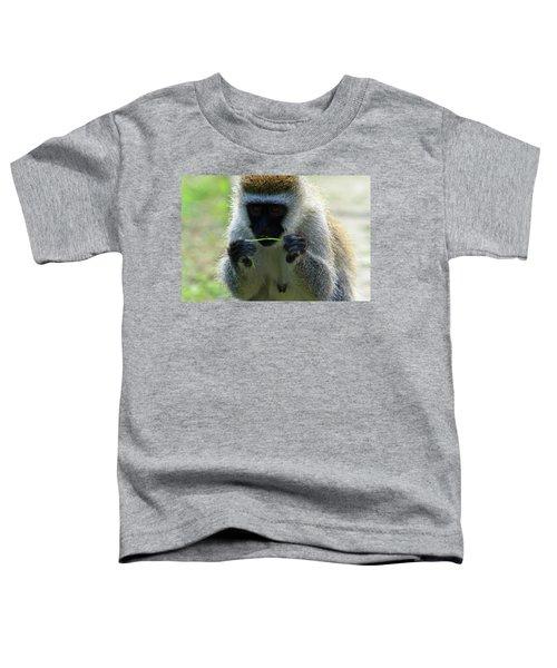 Vervet Monkey Toddler T-Shirt