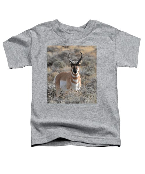 ...and The Antelope Play Toddler T-Shirt