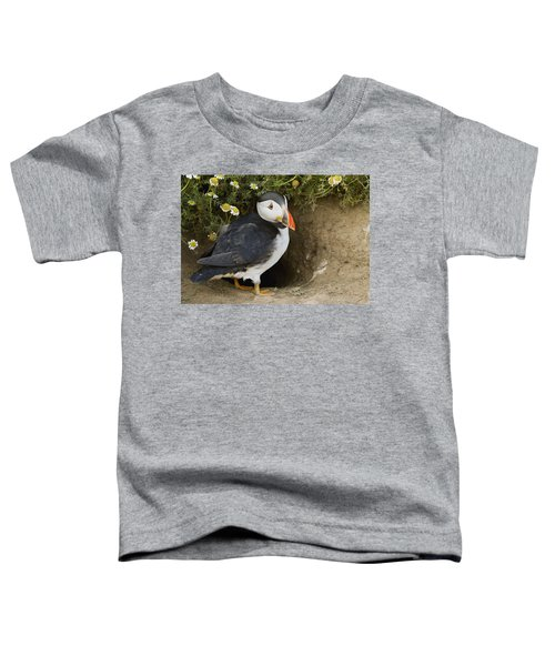 Atlantic Puffin At Burrow Skomer Island Toddler T-Shirt by Sebastian Kennerknecht