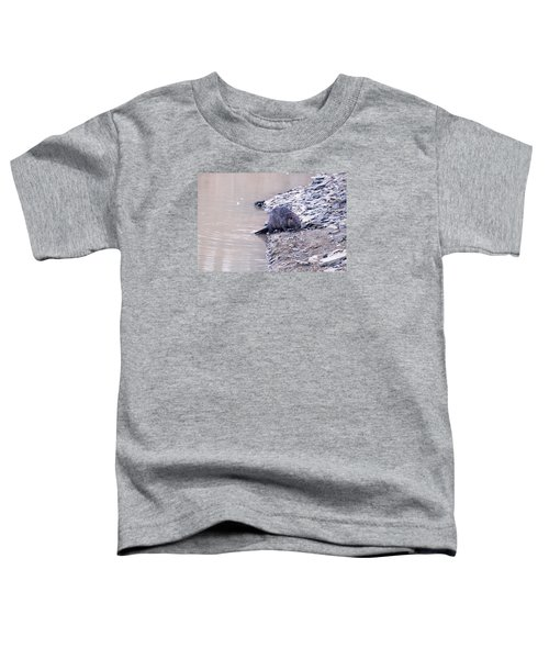 Beaver On Dry Land Toddler T-Shirt by Chris Flees
