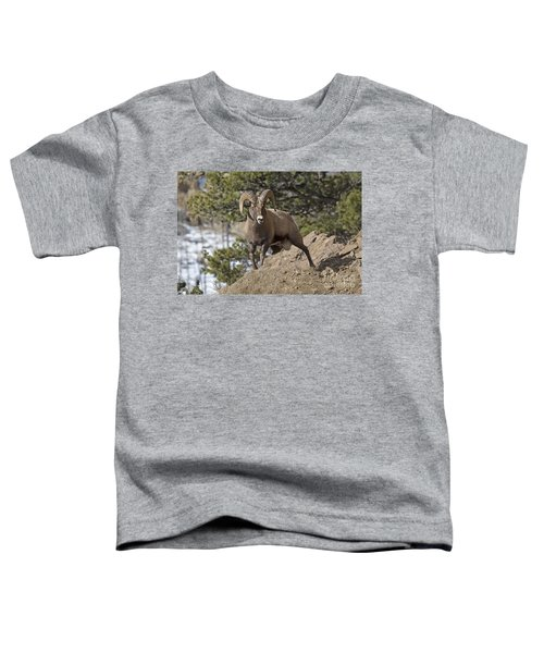 Big Horn Ram Toddler T-Shirt