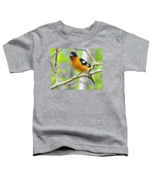 Blach-headed Grosbeak Toddler T-Shirt