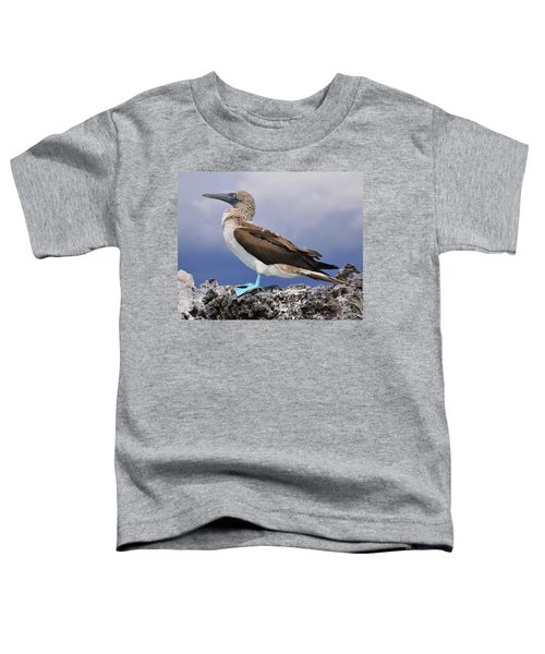 Blue-footed Booby Toddler T-Shirt by Tony Beck
