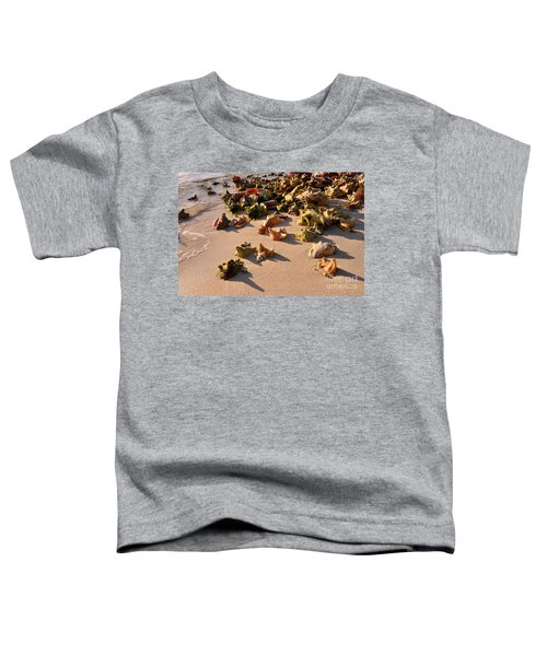 Conch Collection Toddler T-Shirt