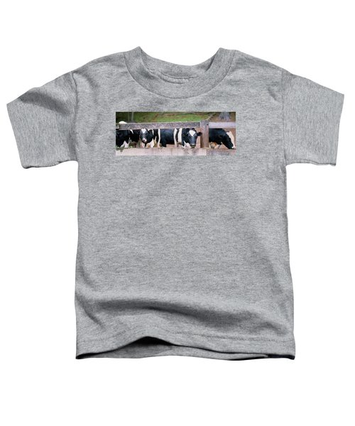 Cows Looking Through A Fence Toddler T-Shirt
