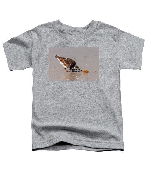 Curious Turnstone Toddler T-Shirt