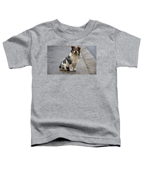 Cute Dog Sits On Pavement And Stares At Camera Toddler T-Shirt