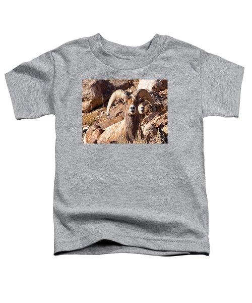 Desert Bighorn Sheep Toddler T-Shirt