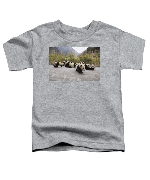 Giant Panda Cubs Wolong China Toddler T-Shirt