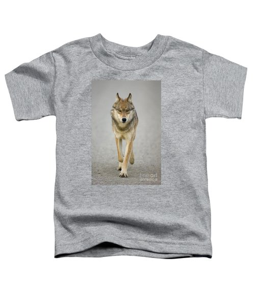 Gray Wolf Denali National Park Alaska Toddler T-Shirt