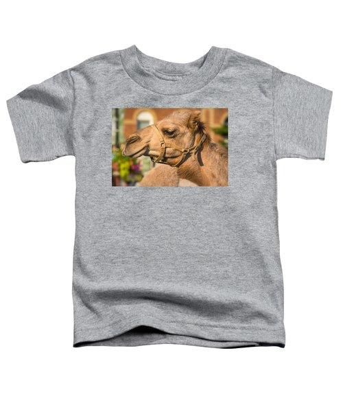 Hump Day Dreaming Toddler T-Shirt