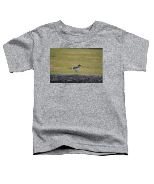Killdeer Toddler T-Shirt by James Petersen