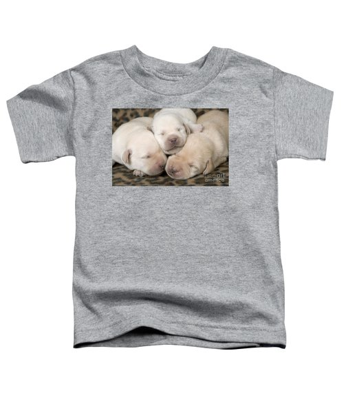 Labrador Puppy Dogs Toddler T-Shirt