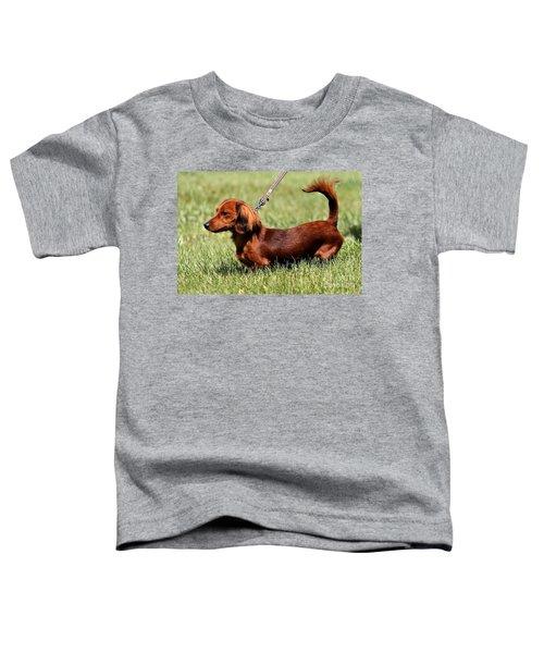 Long Haired Dachshund Toddler T-Shirt