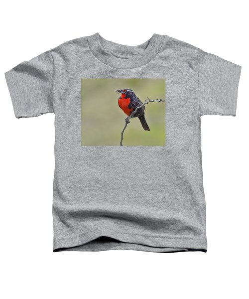 Long-tailed Meadowlark Toddler T-Shirt