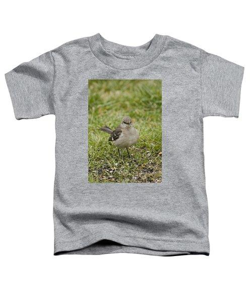 Northern Mockingbird Toddler T-Shirt by Heather Applegate
