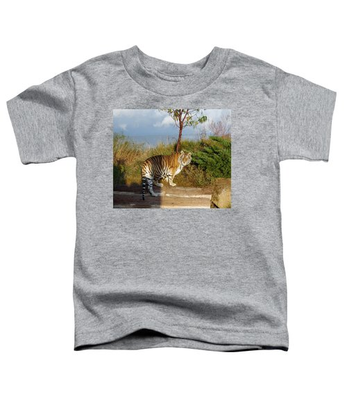 Out Of Africa  Tiger 1 Toddler T-Shirt