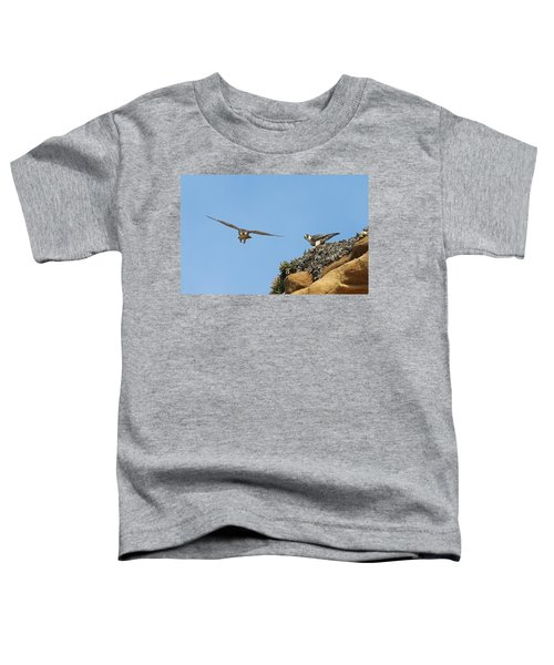Peregrine Falcons - 1 Toddler T-Shirt