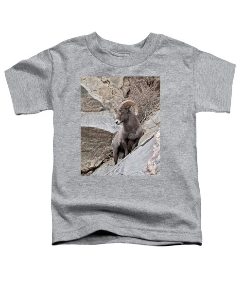 Rocky Mountain Big Horn Sheep Ram Toddler T-Shirt