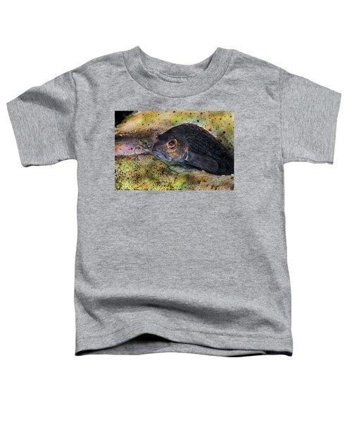 Seabass In A Shell Toddler T-Shirt