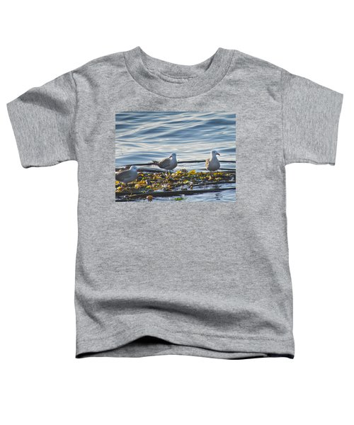 Seagulls In Victoria Bc Toddler T-Shirt