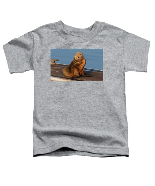 Shy Sea Lion Pup  Toddler T-Shirt