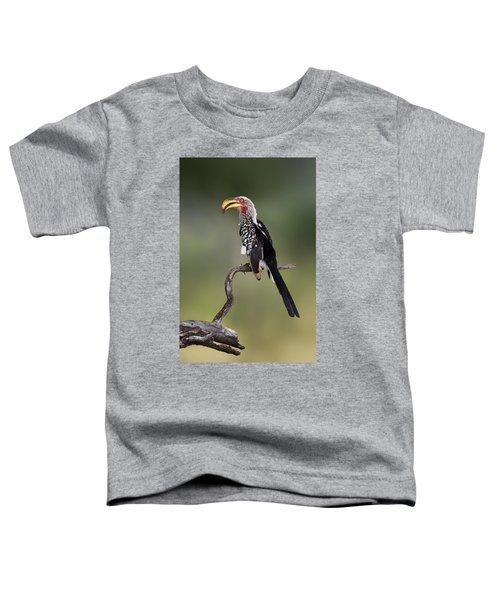 Southern Yellowbilled Hornbill Toddler T-Shirt