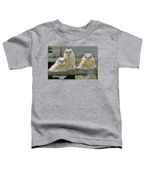 Three Great-horned Owl Chicks Toddler T-Shirt