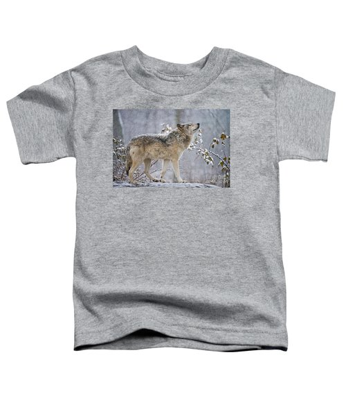 Timber Wolf Pictures 188 Toddler T-Shirt