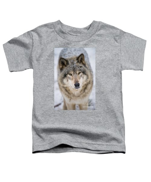 Timber Wolf Pictures 254 Toddler T-Shirt