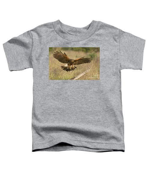 Wild Harris Hawk Landing Toddler T-Shirt