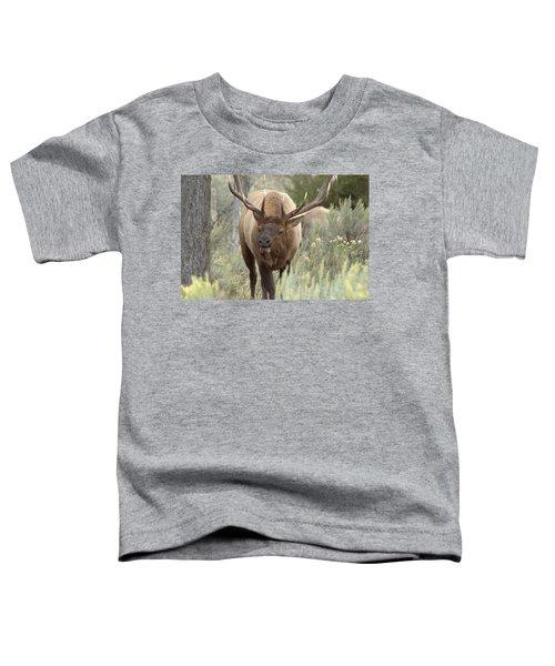 You Looking At Me Toddler T-Shirt