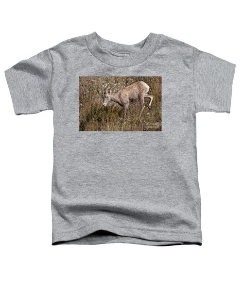 Bighorn Ewe Toddler T-Shirt