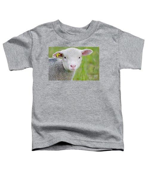 Young Sheep Toddler T-Shirt