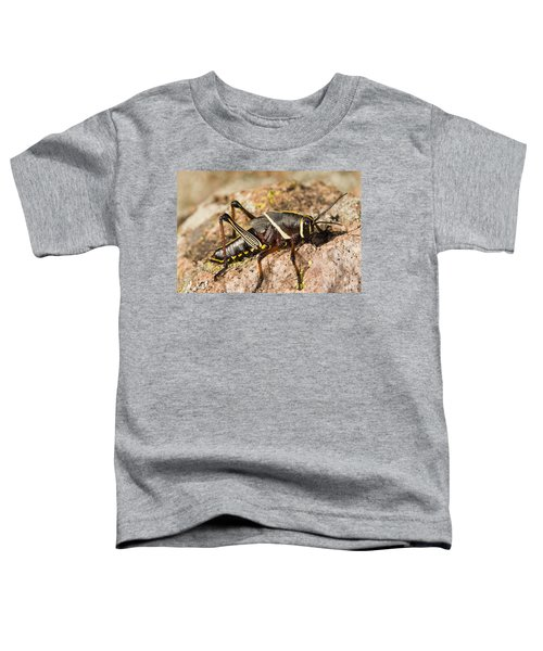 A Colorful Lubber Grasshopper Toddler T-Shirt by Jack Goldfarb
