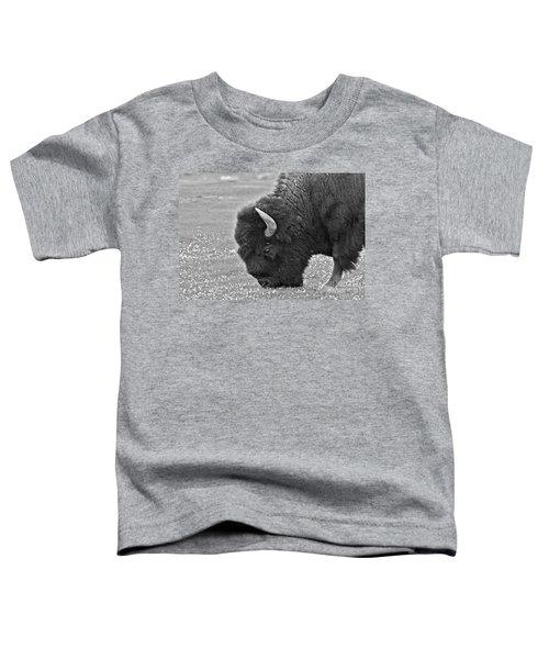 Bison Bull Grazing On Clover Toddler T-Shirt