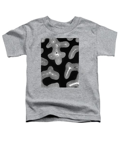 Cerebellum, Cross Section Toddler T-Shirt