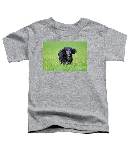 Dog Running On The Green Field Toddler T-Shirt