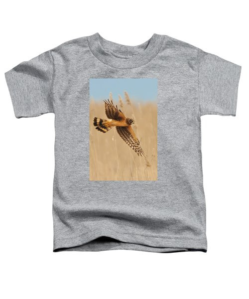 Harrier Over Golden Grass Toddler T-Shirt