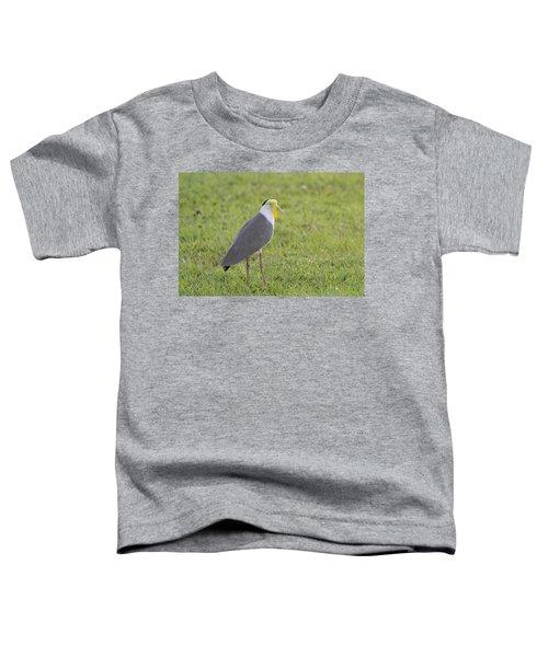Masked Lapwing Toddler T-Shirt by Douglas Barnard
